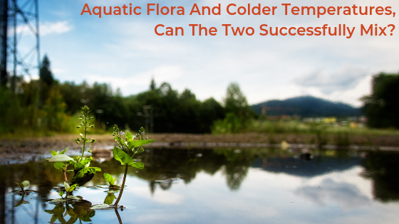 Aquatic Flora And Colder Temperatures, Can The Two Successfully Mix?