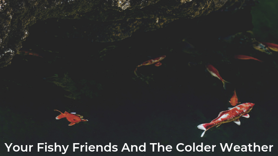 Your Fishy Friends And The Colder Weather