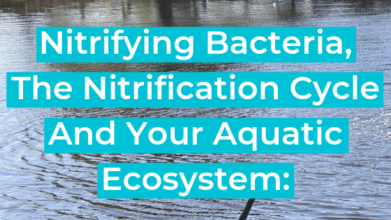 Nitrifying Bacteria, The Nitrification Cycle And Your Aquatic Ecosystem: