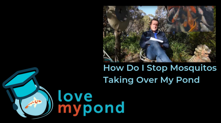 How Do I Stop Mosquitos Taking Over My Pond – LMP Pond Academy