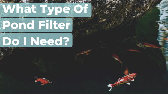 What Type Of Pond Filter Do I Need?
