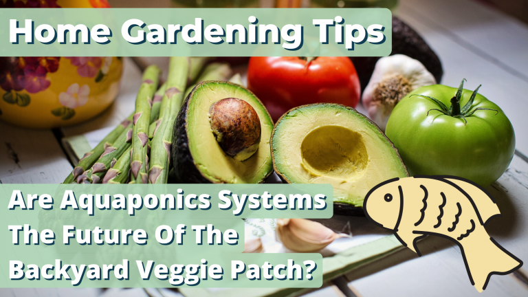Home Gardening Tips – Are Aquaponics Systems The Future Of The Backyard Veggie Patch?