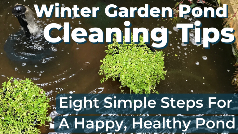 Winter Garden Pond Cleaning Tips – Eight Simple Steps For A Happy, Healthy Pond