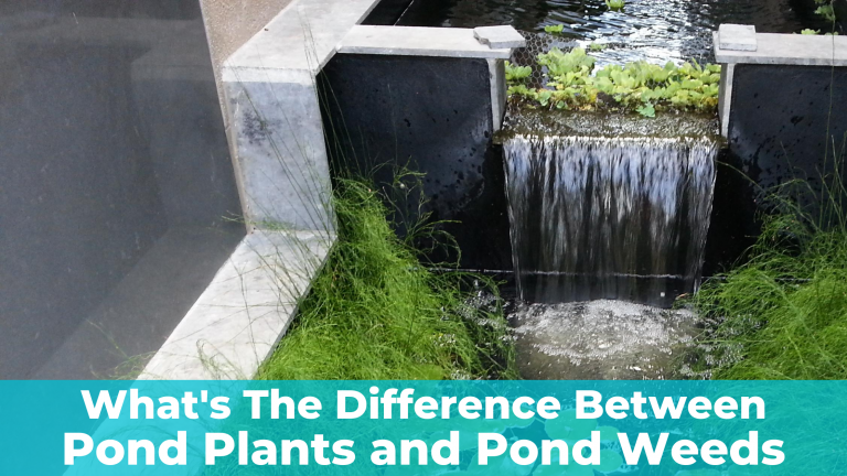 Pond Plants vs Pond Weeds – What's The Difference?