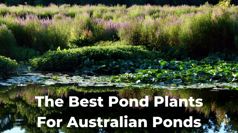 The Best Pond Plants For Australian Ponds